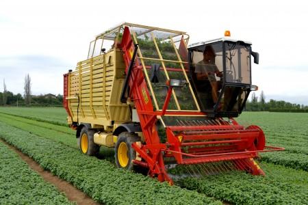 champ de basilic Barilla récolte camion